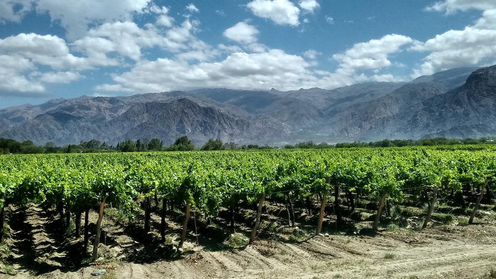 wein-rotwein-weisswein-rosewein-aus-argentinien-online-kaufen-bestellen